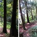 写真: 七尾城(石川県)安養寺郭