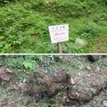 Photos: 七尾城(石川県)樋の水