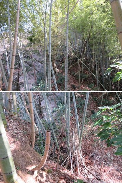 庁南城(長生郡長南町)西側面尾根窪地/神明神社