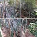 Photos: 庁南城(長生郡長南町)西側面尾根窪地/神明神社