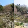 Photos: 庁南城(長生郡長南町)/長久寺仏舎利塔・祖師堂