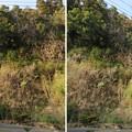 写真: 大多喜城(千葉県夷隅郡大多喜町)南断崖