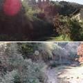 写真: 秋元城(君津市)天然水堀