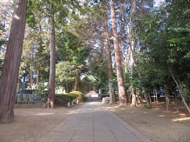 中金杉城(松戸市)