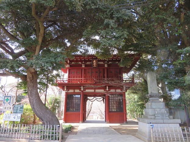 本土寺(松戸市)仁王門