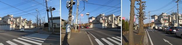 根木内城(松戸市)南側台地