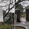 相模台城(松戸市営 松戸中央公園)旧陸軍工兵学校正門門柱