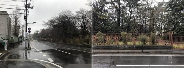 相模台城(松戸市。東京成徳学園)