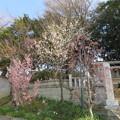 Photos: 18.03.27.矢切神社(松戸市)