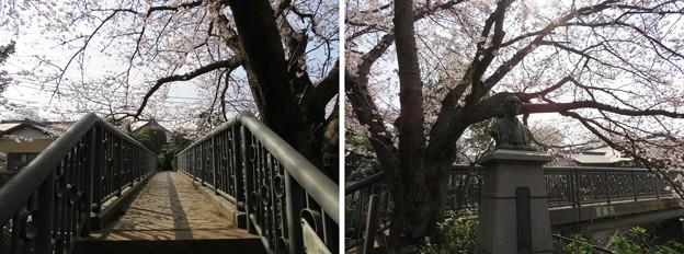 Photos: 18.03.27.第二次国府台合戦場/野菊苑(松戸市)渋谷金蔵像