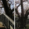 18.03.27.第二次国府台合戦場/野菊苑(松戸市)渋谷金蔵像