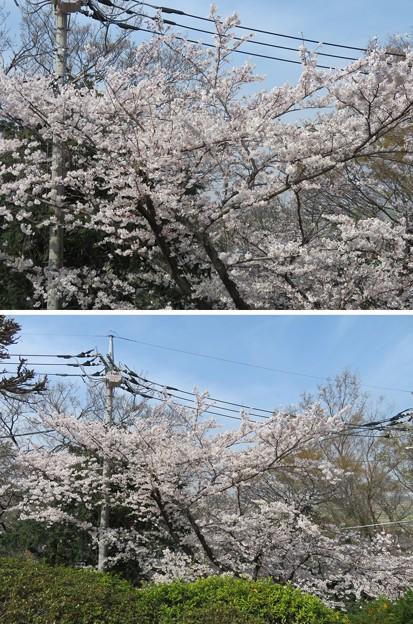 Photos: 18.03.27.第二次国府台合戦場/西蓮寺(松戸市)大坂