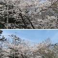18.03.27.第二次国府台合戦場/西蓮寺(松戸市)大坂