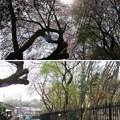 Photos: 18.03.27.国府台天満宮(市川市)国府台城郭