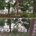Photos: 国府台城(市川市)市川市最高標高地点