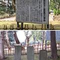 写真: 国府台城(市川市)里見広次並びに里見軍将士亡霊の碑
