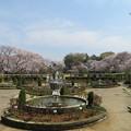 Photos: 18.03.27.総寧寺跡(市川市営 里見公園)
