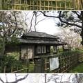 写真: 北原白秋 復元紫烟草舎(市川市営 里見公園)