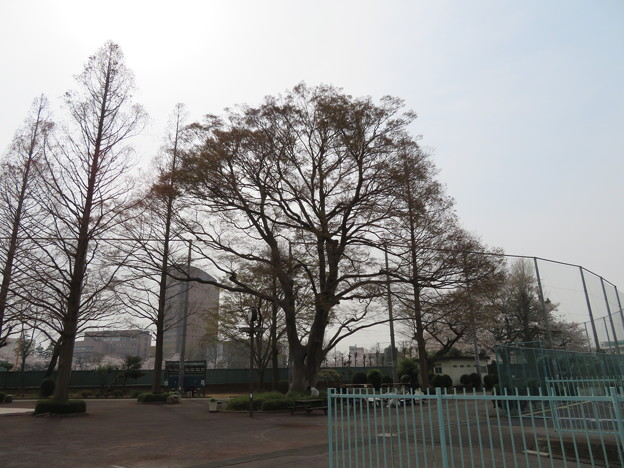 下総国総社跡(市川市スポーツセンター)