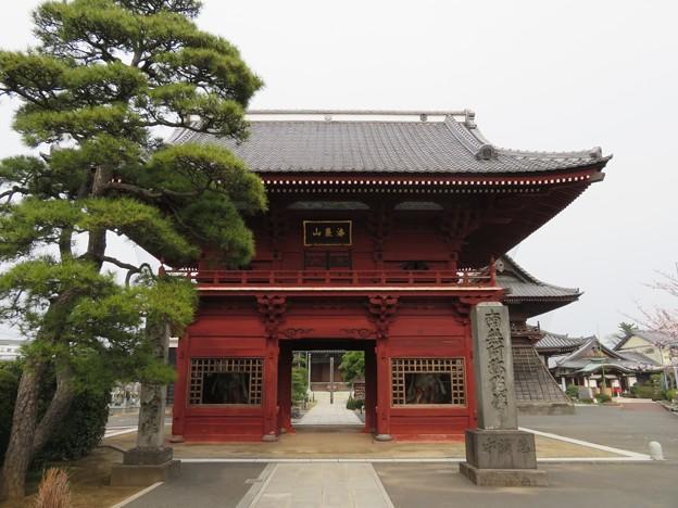 徳願寺(市川市本行徳)仁王門