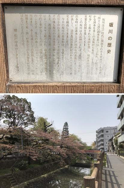 坂川(松戸市)南