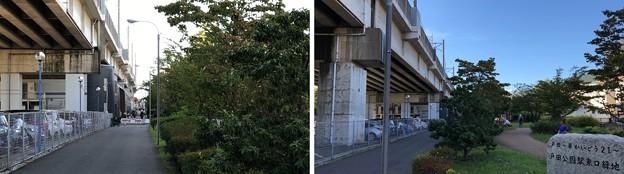 JR戸田公園駅(戸田市)東口緑地