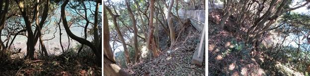 新井城 断崖(三浦市)竪堀跡?