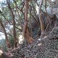 写真: 新井城 断崖(三浦市)竪堀跡?