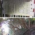 写真: 新井城(三浦市)油壺湾