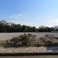 写真: 三崎城(三浦市)本丸跡