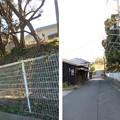Photos: 三崎城(三浦市)北面土塁