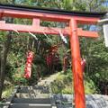 写真: 鶴岡八幡宮(鎌倉市)丸山稲荷神社
