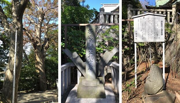白幡神社(藤沢市)源義経公鎮霊碑・義経松?