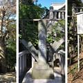 写真: 白幡神社(藤沢市)源義経公鎮霊碑・義経松?