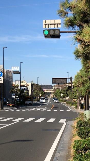 若宮大路 鶴岡八幡宮一の鳥居(鎌倉市)