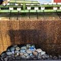 鶴岡八幡宮(鎌倉市)手水鉢