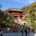 Photos: 鶴岡八幡宮(鎌倉市)大石段下部 源実朝殺害現場