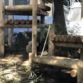 上野動物園(台東区上野公園)ジャイアントパンダ