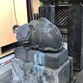 Photos: 湯島天満宮(文京区)古 臥牛(撫で牛)