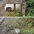 Photos: 紹太寺(小田原市)総門跡・礎石