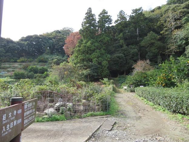 紹太寺(小田原市)旧参道