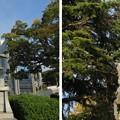 写真: 伝 伊東家屋敷跡(伊東市営 物見塚公園)伊東祐親騎馬像