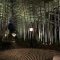 写真: 修善寺温泉(伊豆市)竹林の小径