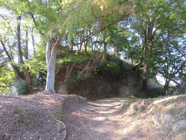 韮山城(伊豆の国市)二の丸より本丸