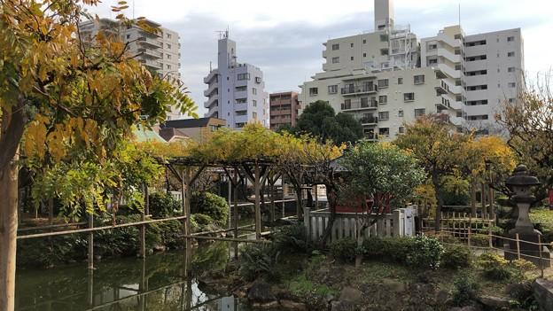 18.12.03.亀戸天神社(江東区)