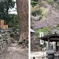 Photos: 杉本城/杉本寺(鎌倉市)五輪塔群・遺構?