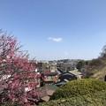 19.03.05.松門寺(八王子市)より東