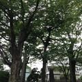 13.08.22.多賀神社(八王子市)