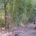 Photos: 班渓寺(嵐山町)墓地西縁~本堂後方