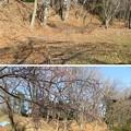 Photos: 菅谷館(嵐山町)南郭土塁